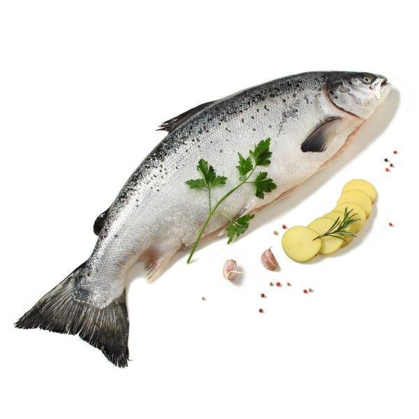 Salmone intero fresco Norvegese 3/4 kg
