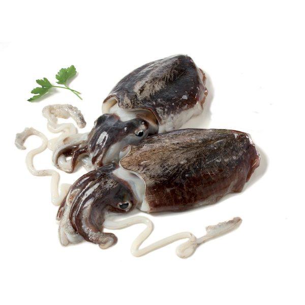 Seppia nera mediterranea