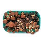 Funghi pioppini 250g Monalfungo