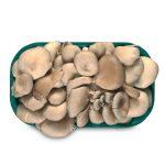 Funghi pleurotus 500g Monalfungo